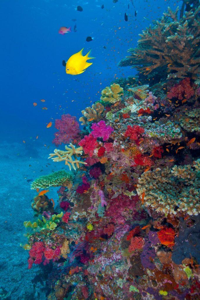 Fiji Honeymoon Itinerary - Snorkeling   Namale Resort