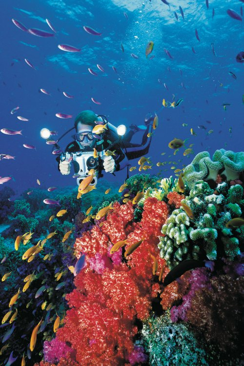 fiji-scuba-diving