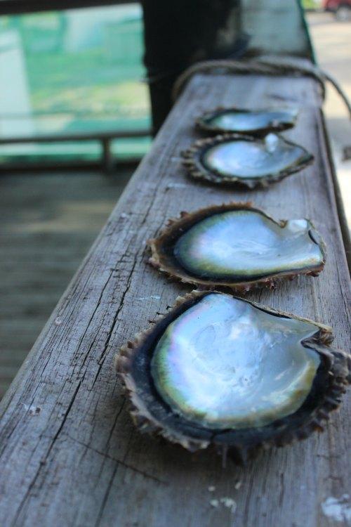 fiji-attractions
