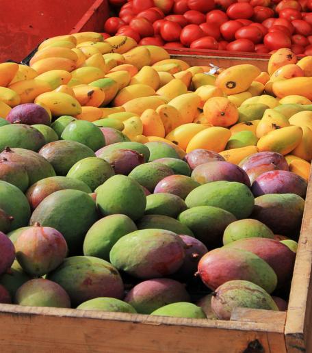mango-season-fiji-mango-margarita