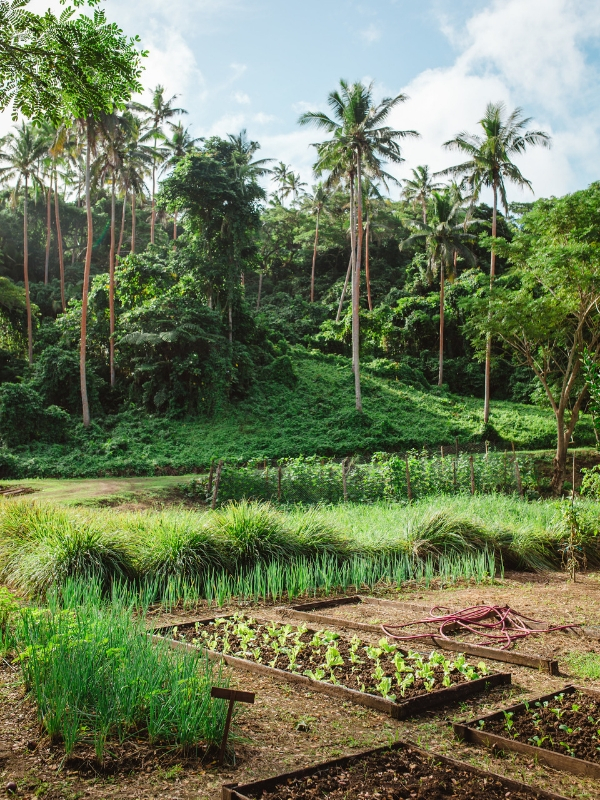 farm-to-table-fiji